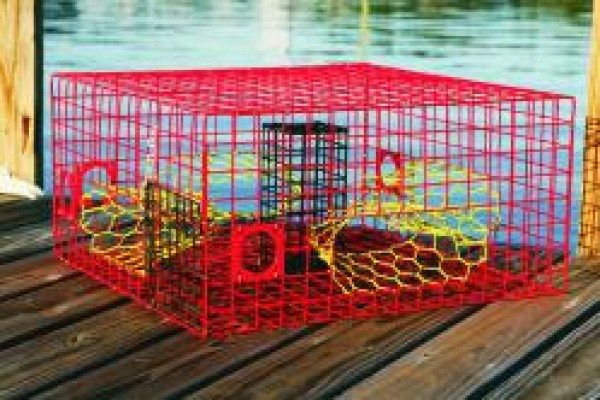 Large crab funnel pinfish traps live bait pens