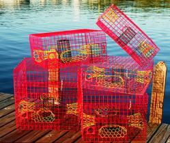 crab traps bait pinfish pens